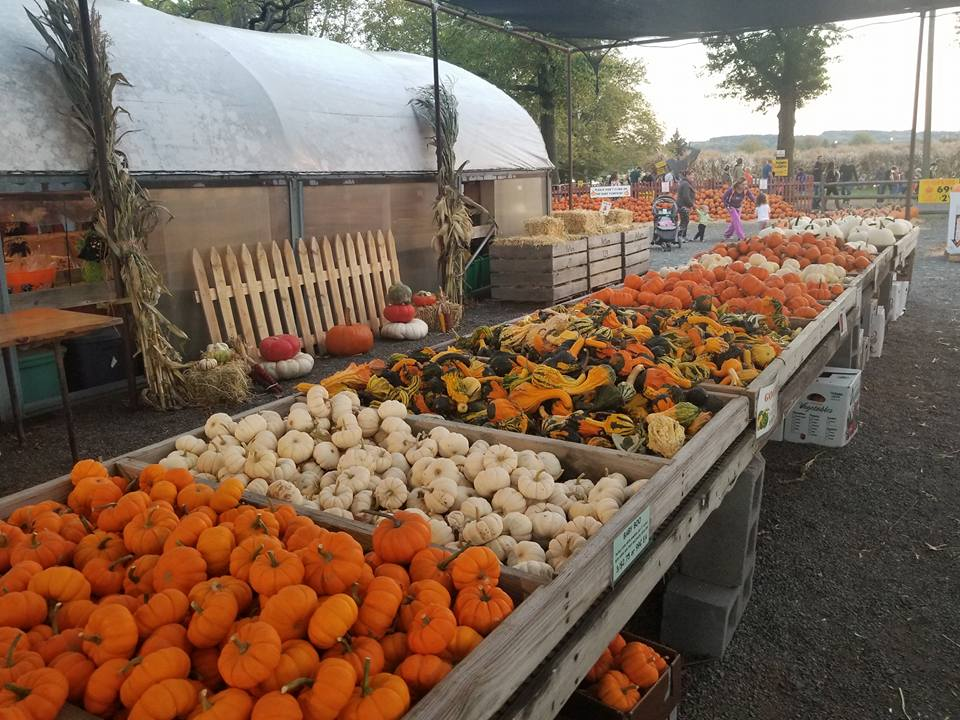 Local Spots for Pumpkin Picking and Hayrides
