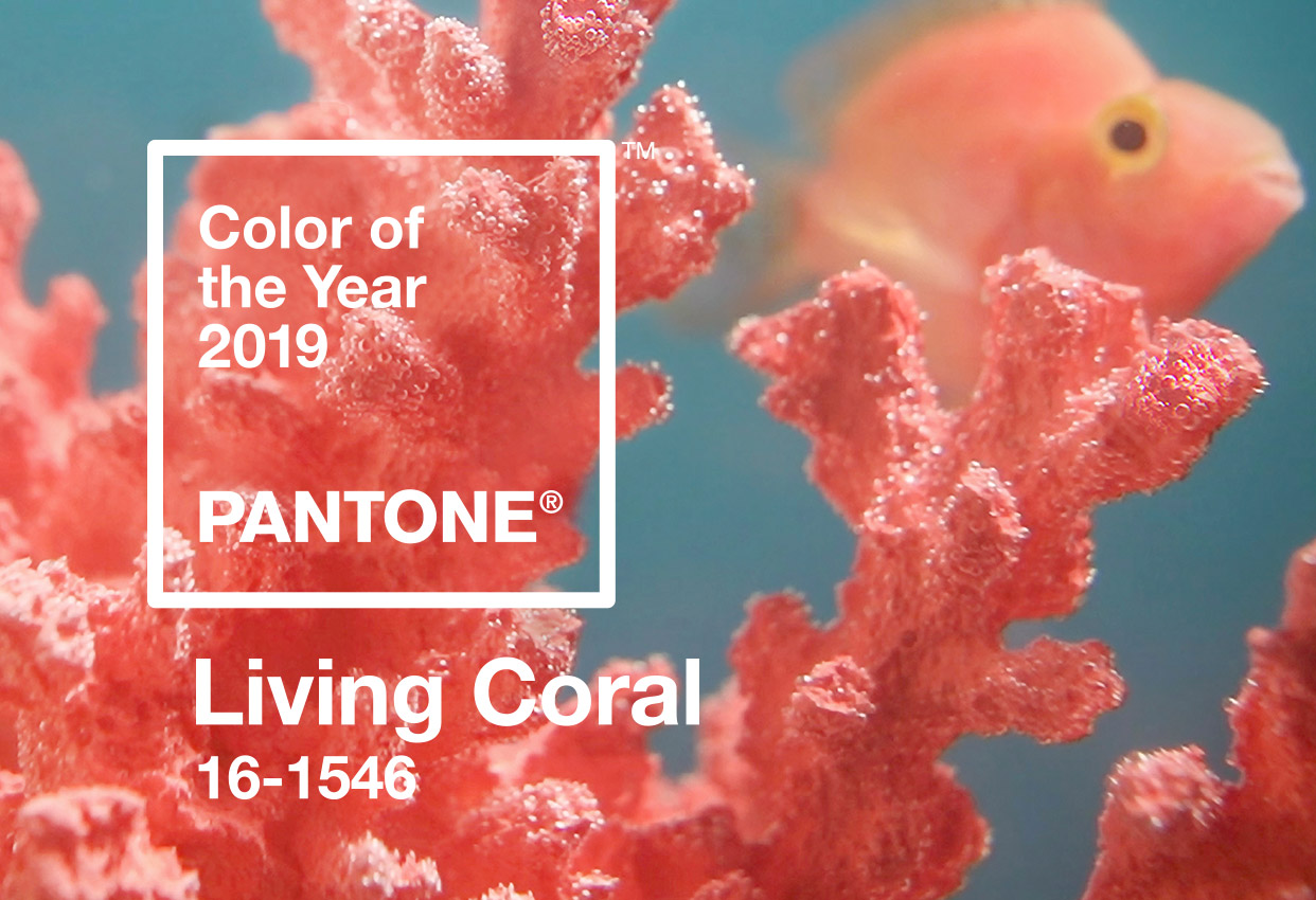 Pantone Announces the 2019 Color of the Year!